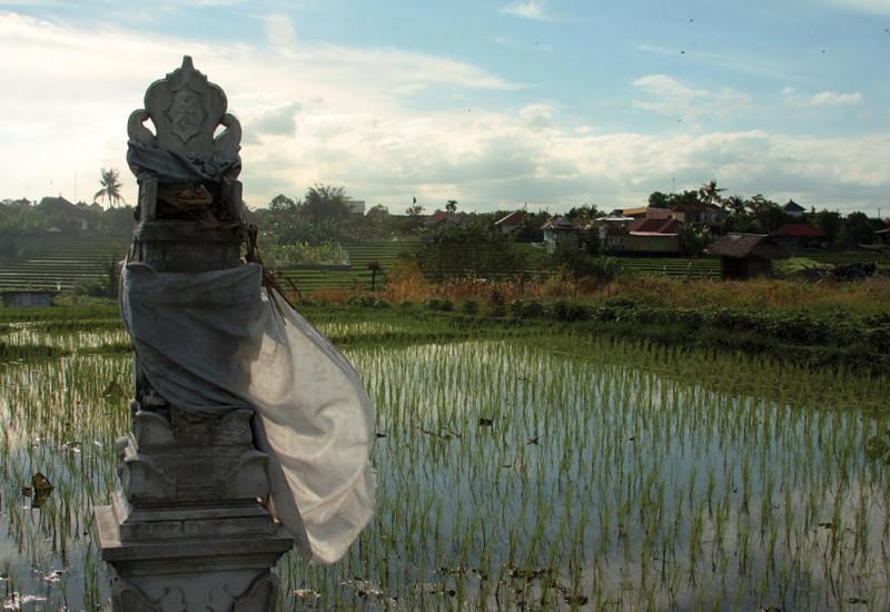 RicePaddies-EdaSofia-CrossingSolo