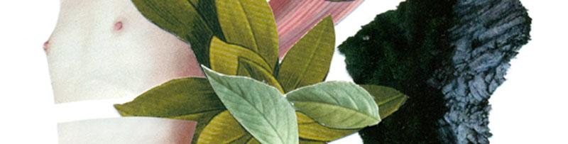 verde-edasofia--rocio-montoya2